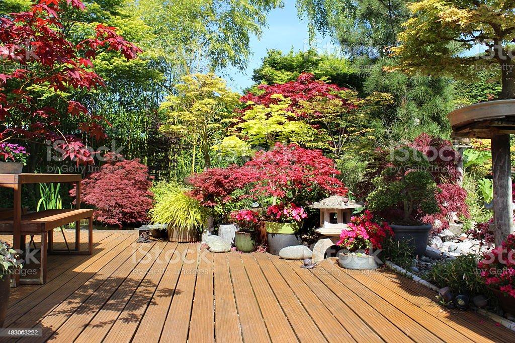 image de terrasse en bois avec ses plantes en pot d rables du japonacers photos et plus d. Black Bedroom Furniture Sets. Home Design Ideas