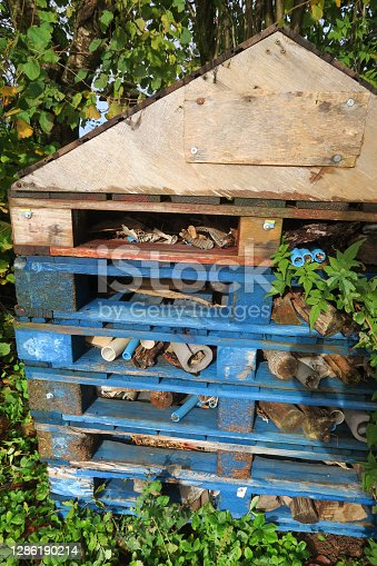 Stock photo of large homemade blue insect house for bees, bugs, butterflies, ladybirds / ladybugs, insects, made from painted pallet wood timber and bricks, wood bug hotel and insect habitat with flower pots providing shelter in rain and cold winter weather.
