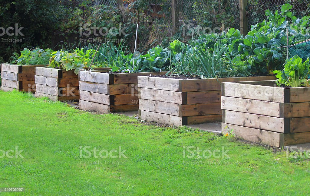 Image of wooden raised beds in allotment vegetable garden, timber stock photo