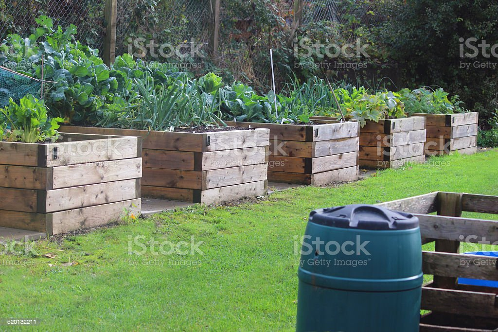 Image of wooden raised beds in allotment vegetable garden, water-butt stock photo