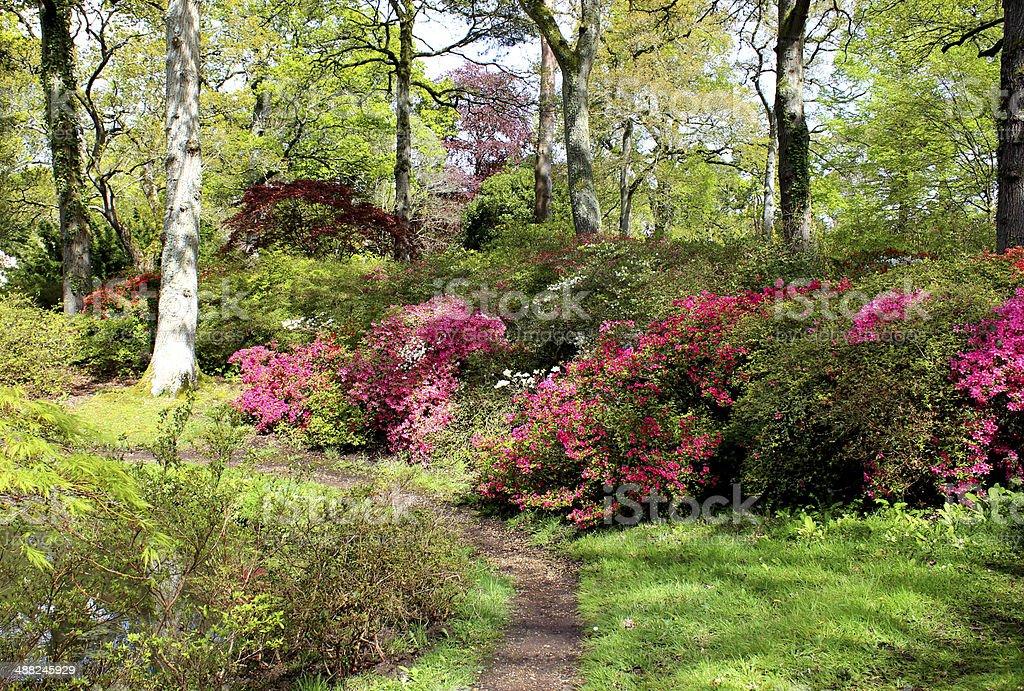 Immagine di bosco con azalee giardino fiorito e giapponese for Giardino fiorito
