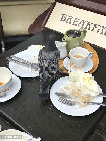 Stock photo of Pigeon on restaurant table food-picking from a deserted breakfast table with crockery and tea cups, eating cake unhygienic food, needing pest control.