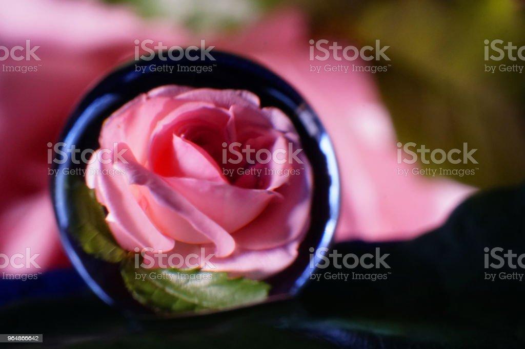 Image Photo Roses royalty-free stock photo