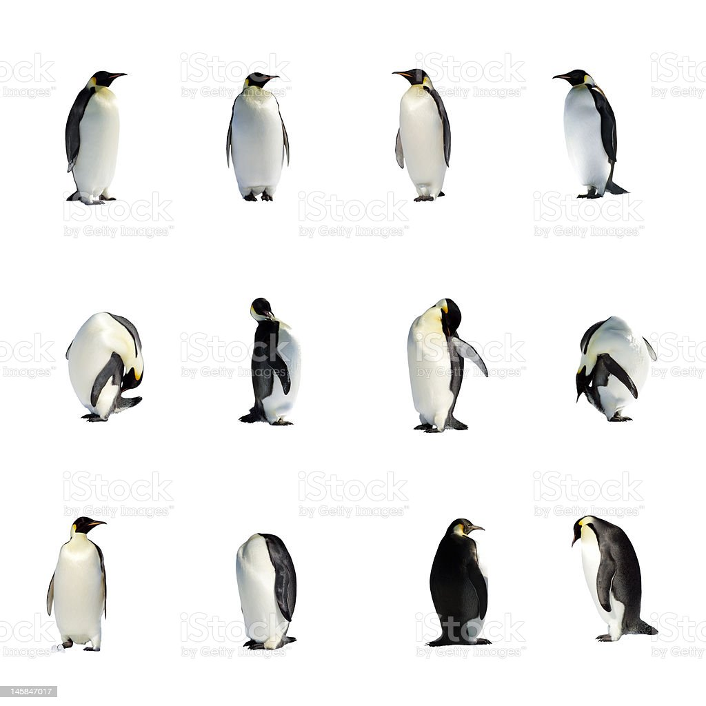 Image set of cute penguins with different poses stock photo