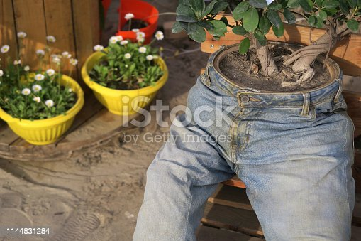 Photo showing an unusual and rather quirky garden planter made from an old pair of blue denim jeans. The stuffed jean trouser legs look rather like a scarecrow, with the waist consisting of a flower pot, planted with a twin trunk fig bonsai tree (button panda ficus microcarpa ginseng) with aerial roots.