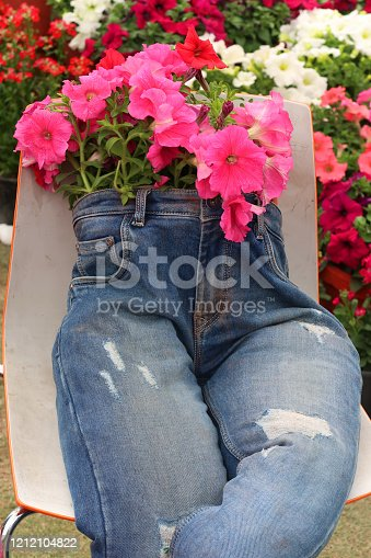 Photo showing an unusual and rather quirky garden planter made from an old pair of blue denim jeans. The stuffed jean trouser legs look rather like a scarecrow, with the waist consisting of a flower pot, planted with pink petunias.