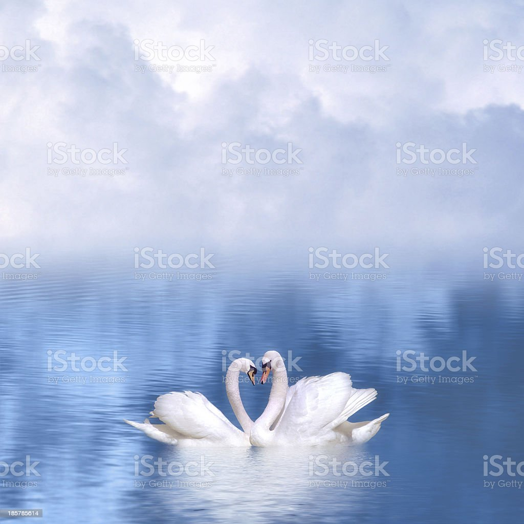 Imagery of two swans on blue water and mist forming a heart stock photo