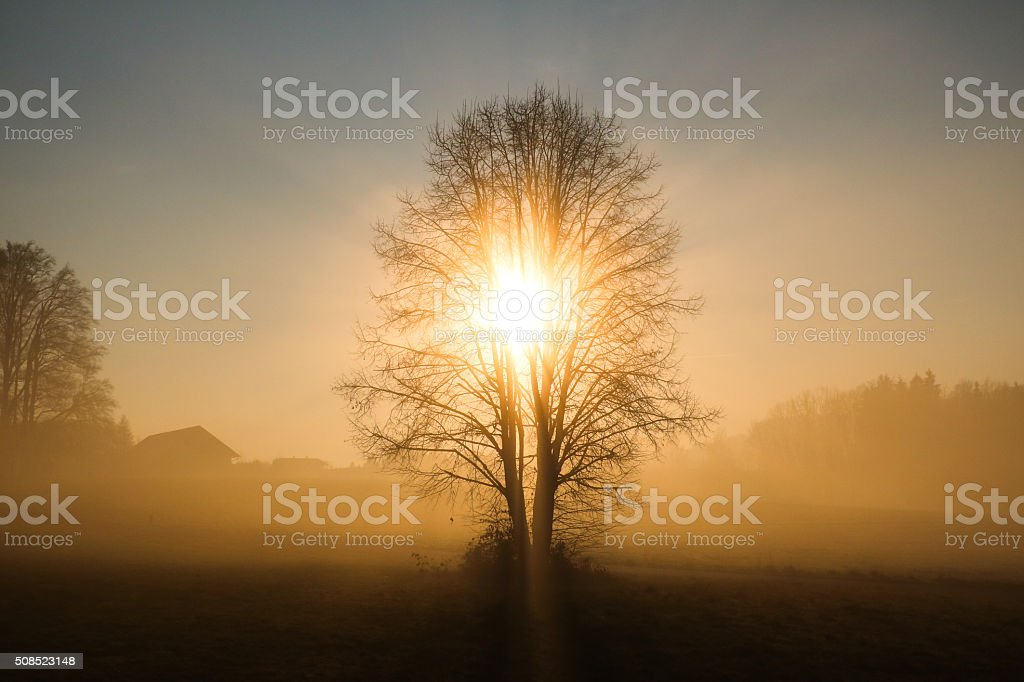 Imagination tree stock photo