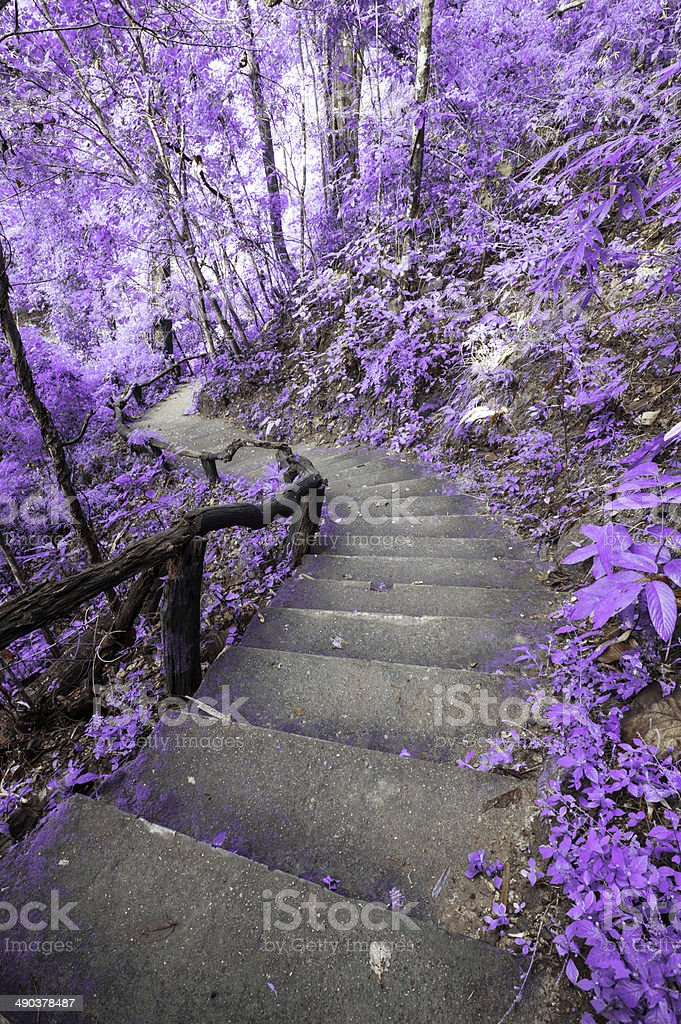 Imagine Purple forest with stair stock photo