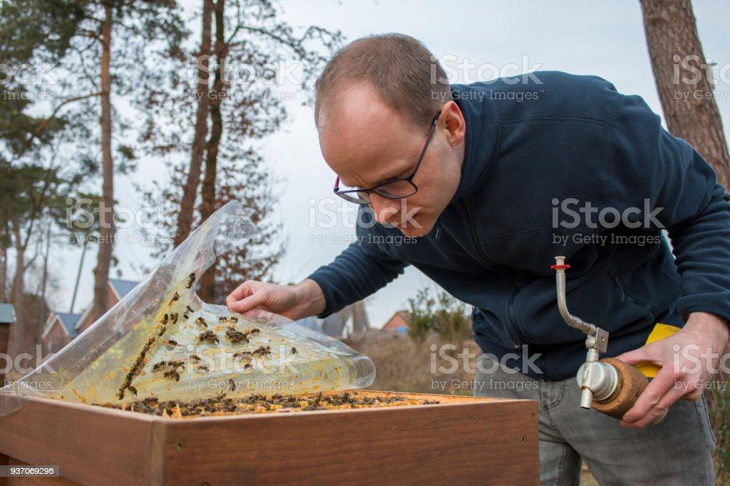 Imker kümmert sich um sein Bienenvolk, indem er eine Plastikabdeckung anhebt, um die Bienenwabe zu sehen stock photo