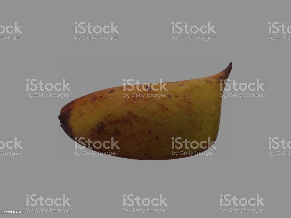 Immature sappanwood pod with gray background stock photo