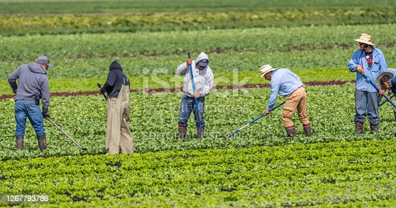 istock immigrant farm workers 1267793786