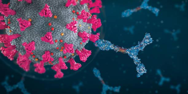 Immunoglobulin or antibody proteins attack a corona virus pathogen cell - 3d illustration stock photo
