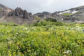 istock Imogene Wildflowers 636888426