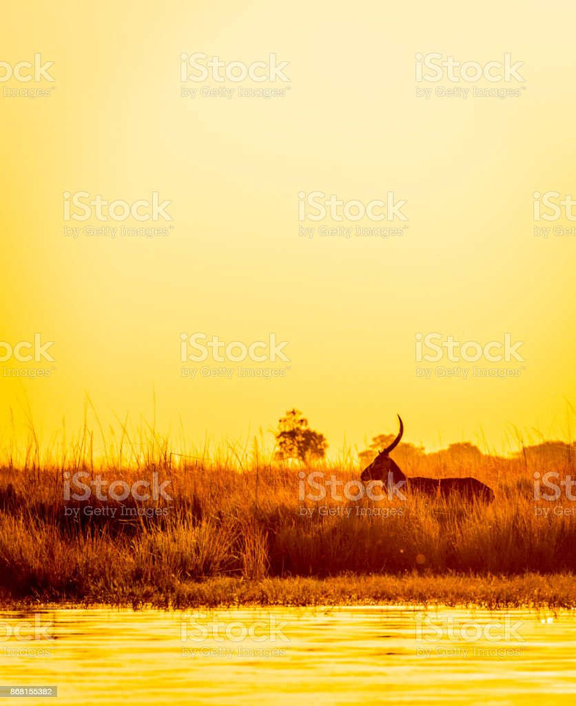 Impala Sonnenuntergang Silhouette – Foto