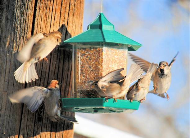 Impatient Hungry Birds at an Overcrowded Bird Feeder Impatient Hungry Birds at an Overcrowded Bird Feeder feeding frenzy stock pictures, royalty-free photos & images