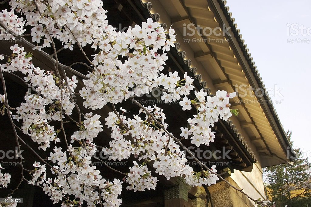 Imperial Palace Blossoms royalty-free stock photo