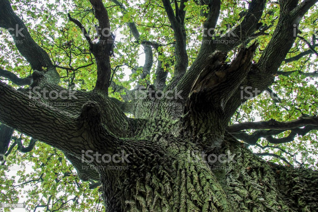 imposing tree with branches royalty-free stock photo