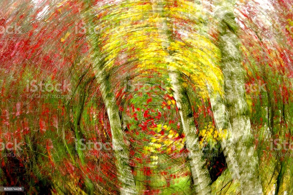 impression,autumn zbiór zdjęć royalty-free