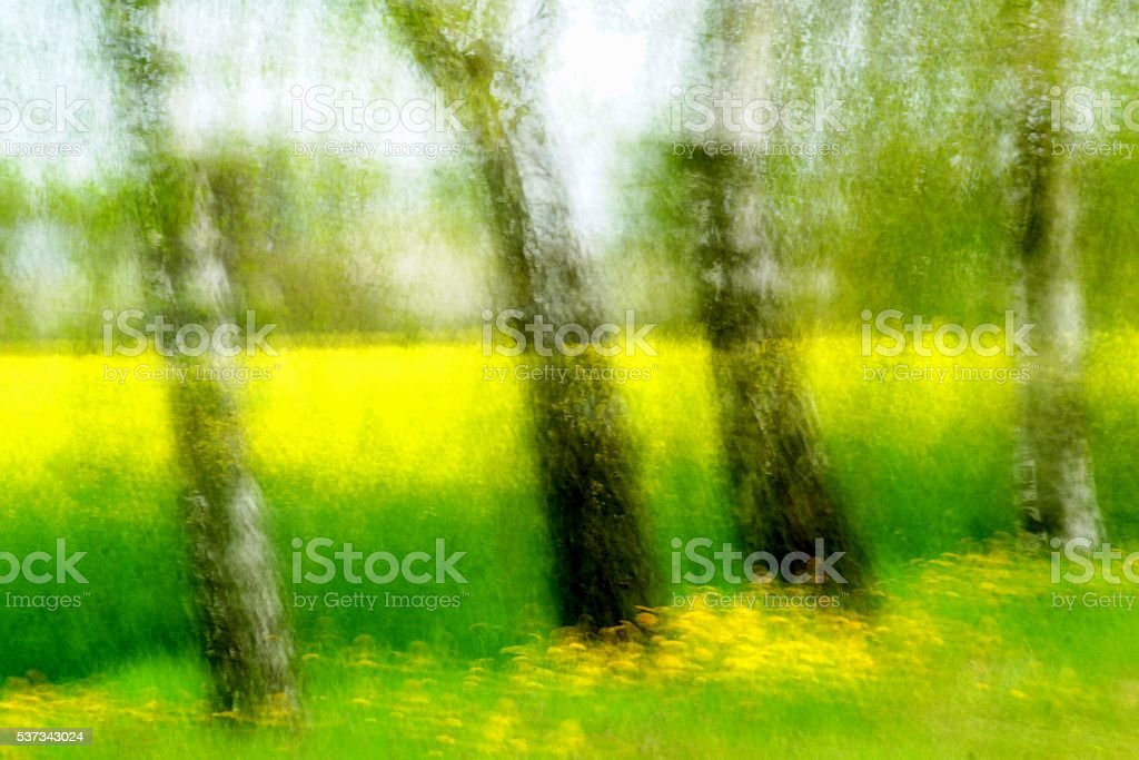 impression-birch stock photo