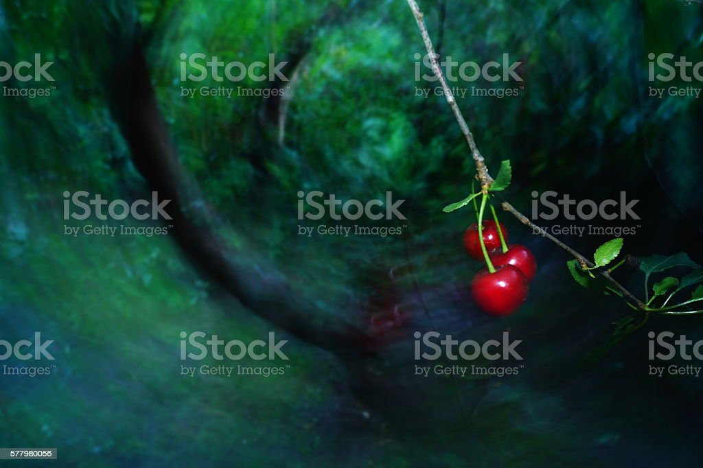 impression-cherry stock photo