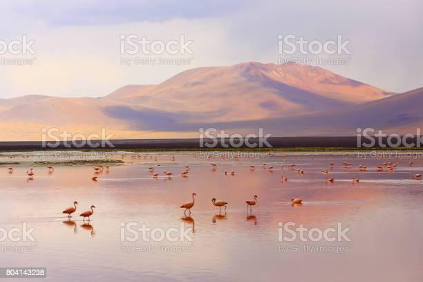 Impressive laguna colorada red lake reflection andean flamingos birds picture id804143238?b=1&k=6&m=804143238&s=612x612&h=nruyghomd1k1y9z4mui2xuelzrjym rcc5eqytdhgom=
