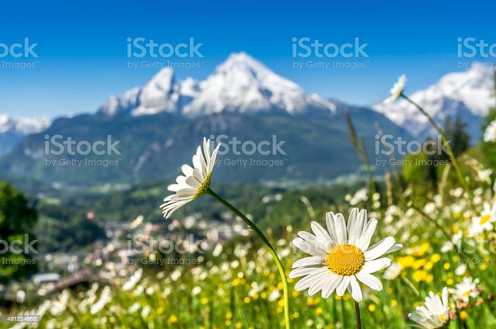 Impressive Mountain with beautiful flowers in springtime, Bavaria, Germany stock photo