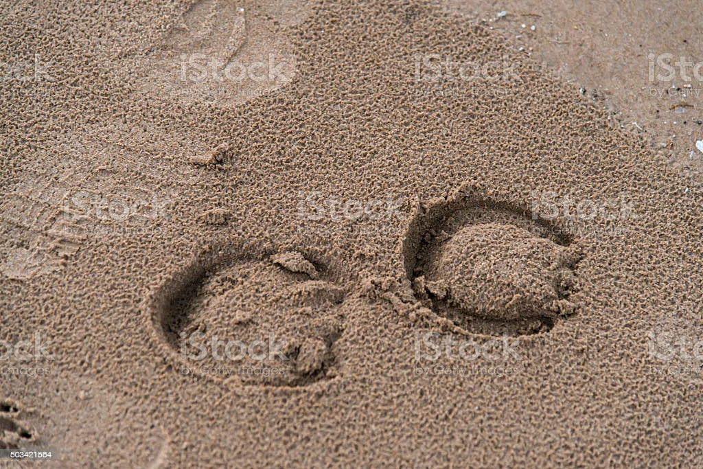 Imprints Of Horseshoes In wet sand stock photo