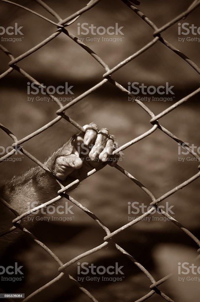 imprisonment stock photo