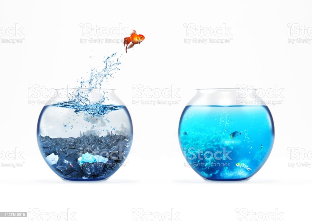 Improvement and moving concept with a goldfish jumping from a dirty aquarium to a clean one foto stock royalty-free