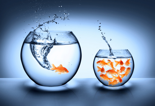 goldfish jumping from an aquarium small and crowded to the largest