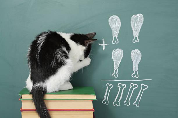 Impudent cat – Foto