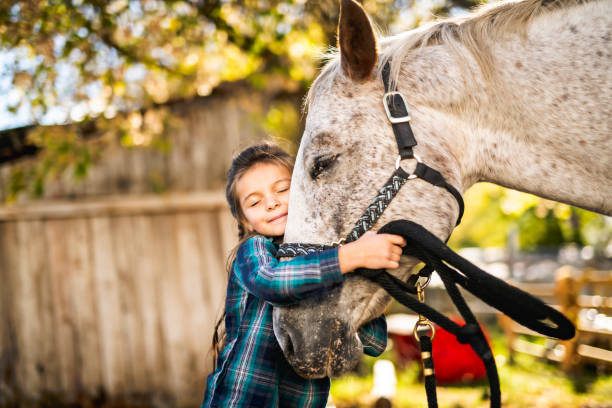 in a beautiful autumn season of a young girl and horse - horse stock pictures, royalty-free photos & images