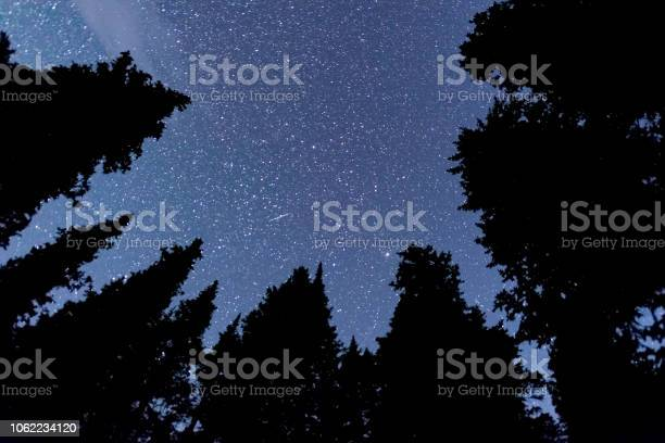 Photo of In a Forest Looking Up at the Stars