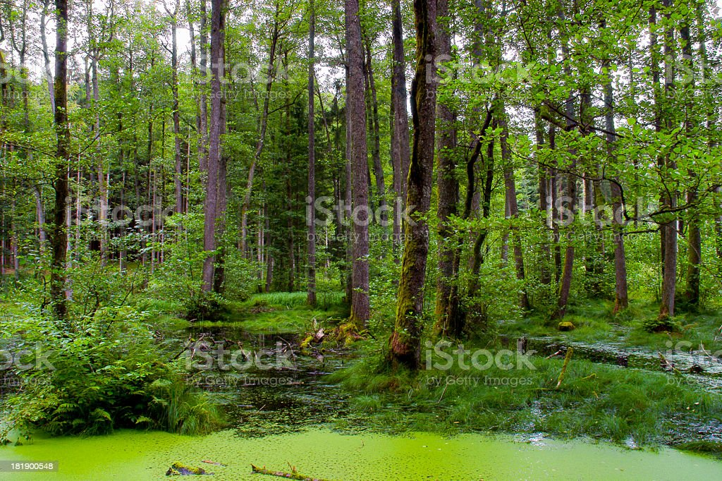in a forest stock photo