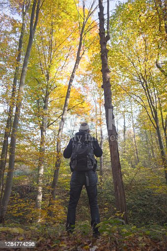 Adult man hiking in beautiful forest in autumn
