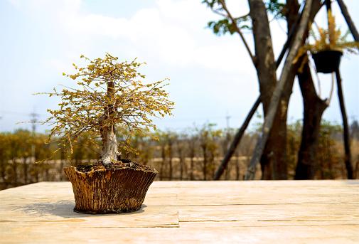 가 작은 분재 나무 점토 냄비에 나무 바닥 현대 주택 디자인에 작은 귀여운 장식 식물 닫습니다 0명에 대한 스톡 사진 및 기타 이미지