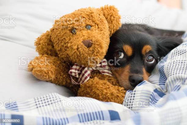 In bed with ted picture id902686850?b=1&k=6&m=902686850&s=612x612&h=zbqd0it7nftelal782pawvnqzotvnu9x3uvc3htuwyk=