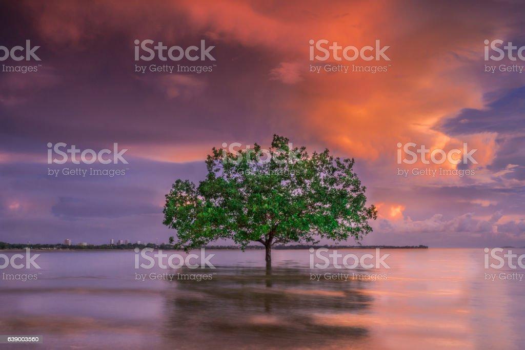 In Between, single tree Darwin Northern Territory Australia stock photo