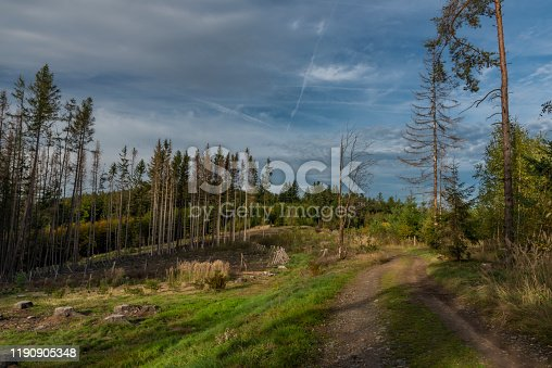 istock In color forest near old ruin of church near Besiny village in south Bohemia 1190905348