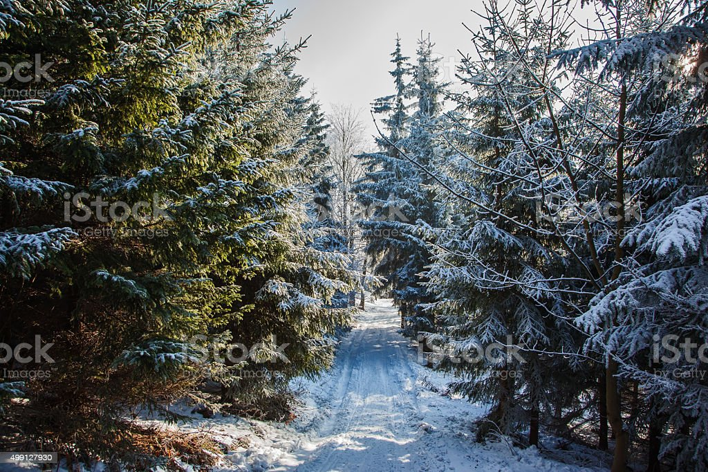 In coniferous wood a narrow glade for skiing run stock photo