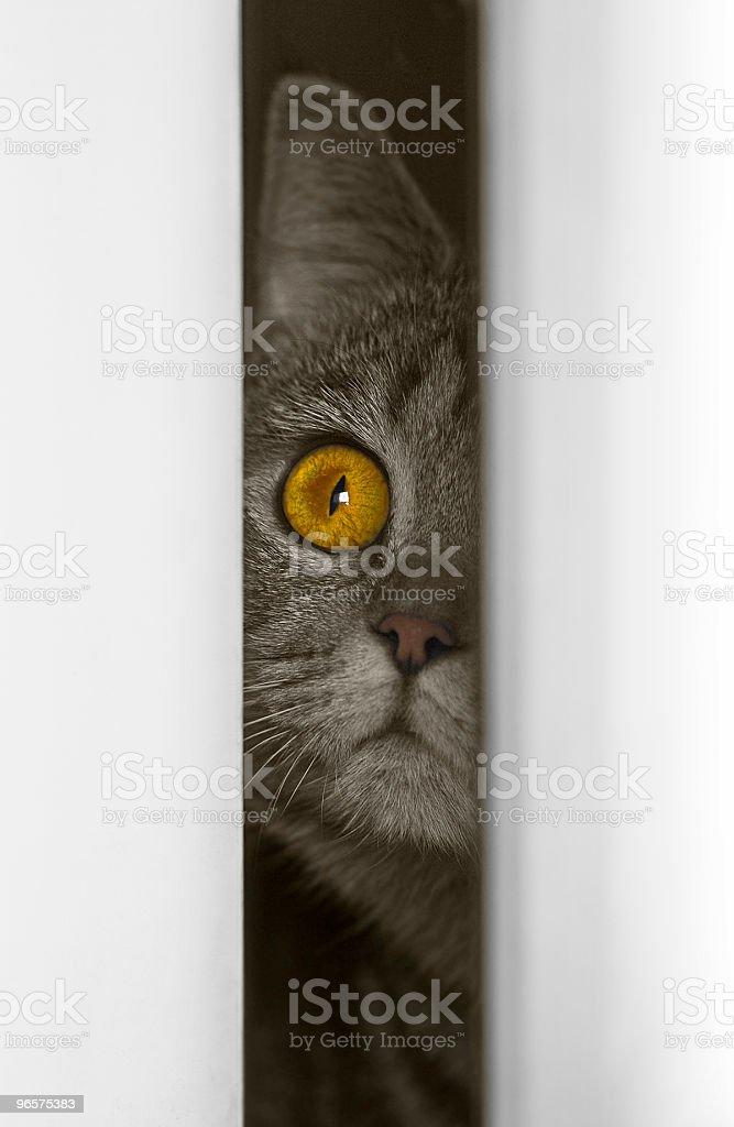 In doorway royalty-free stock photo