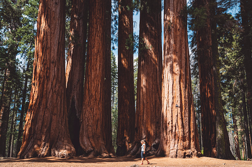 In Every Walk With Nature One Receives Far More Than He Seeks Sequoia National Park Stock Photo - Download Image Now