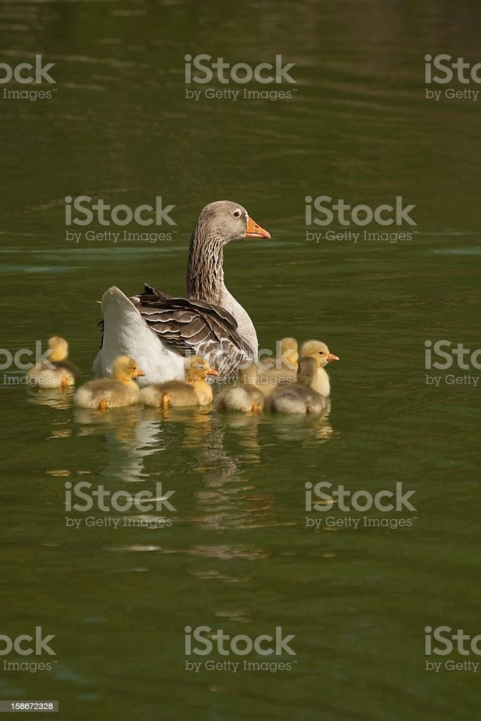 In family royalty-free stock photo