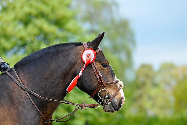 in first place - horse bit stock photos and pictures