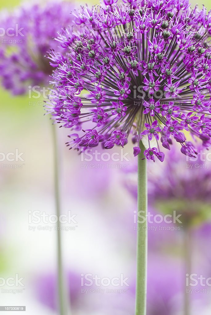 In focus shot a pretty purple flower​​​ foto