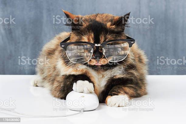 In full control of the mouse picture id176406560?b=1&k=6&m=176406560&s=612x612&h=o1abwpomh f9z9u2gk8z2x8itwzbf ygy efnn0jlnq=
