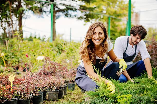 in gardening business - jardinería fotografías e imágenes de stock