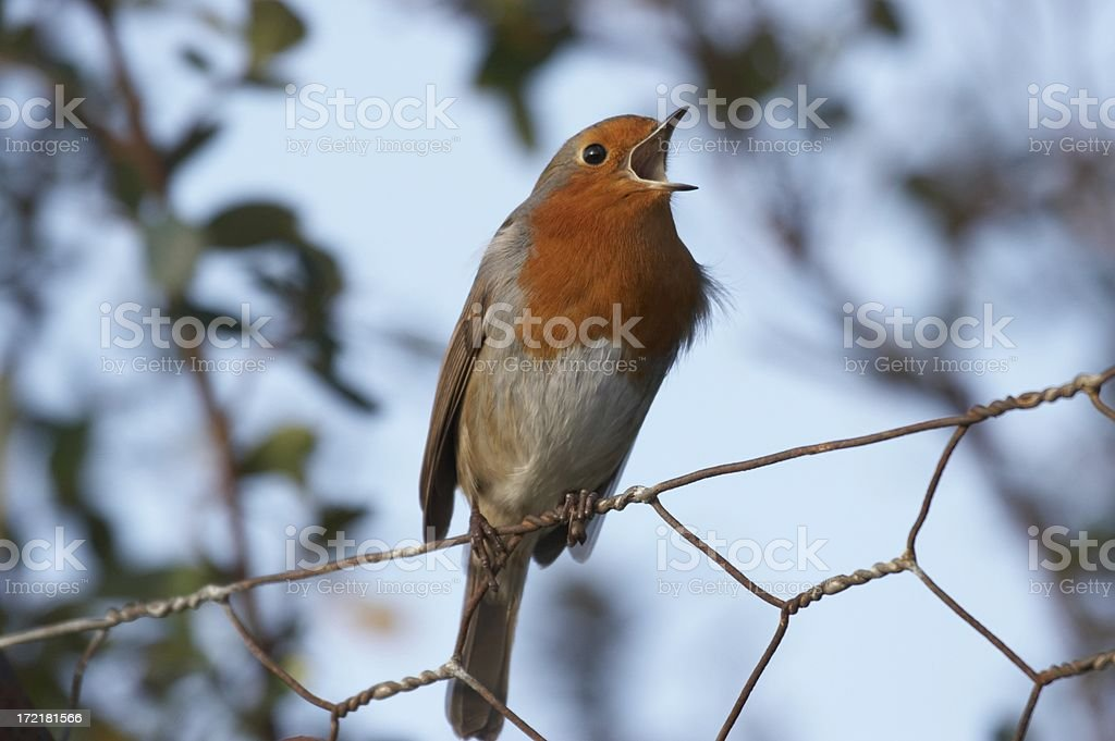 In good voice royalty-free stock photo