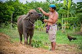 In hot day.A farmer take a bath his buffalo .